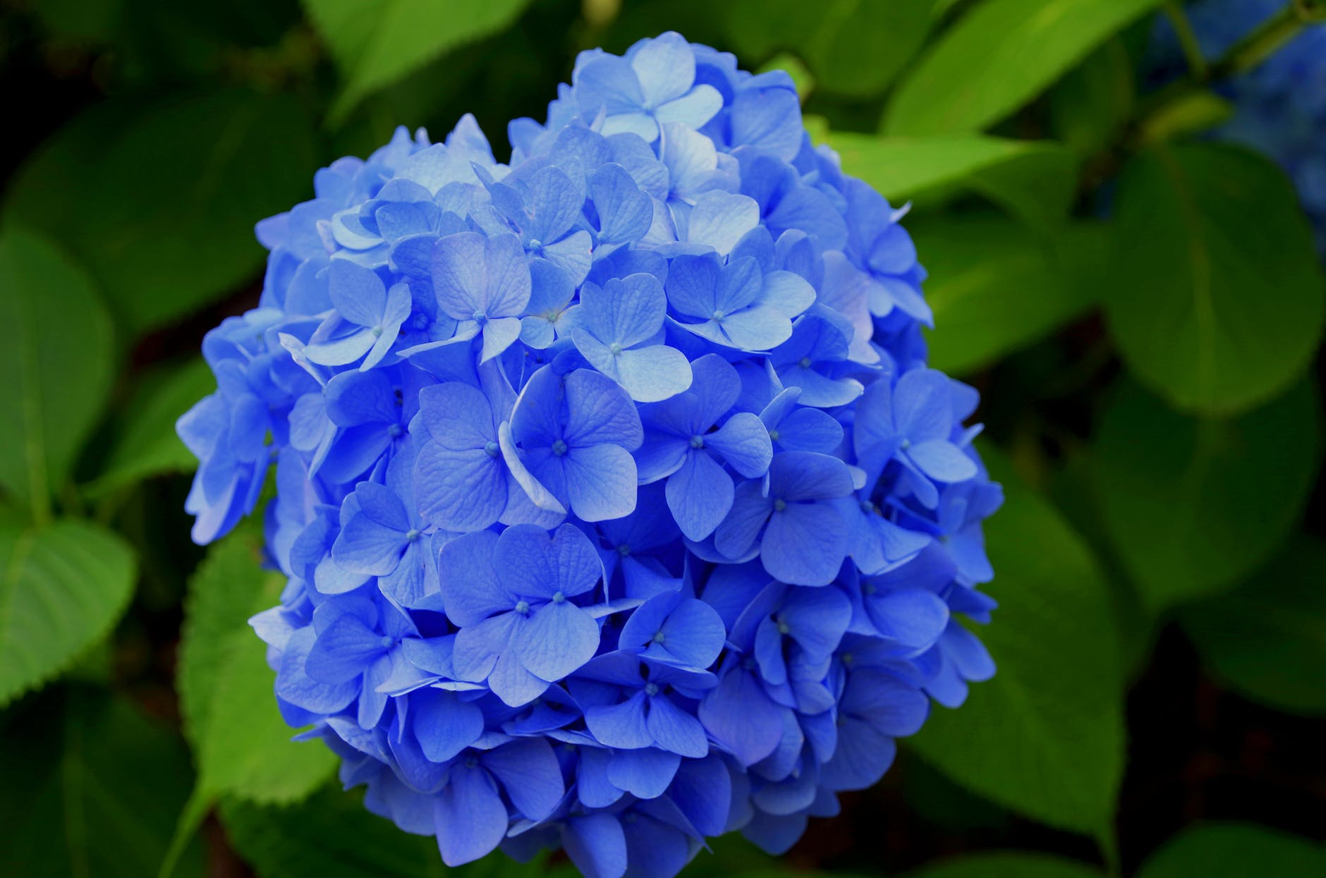 beautiful blooming blossom blue